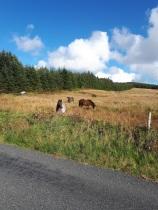 sanctuary kilmoon lisdoonvarna horses